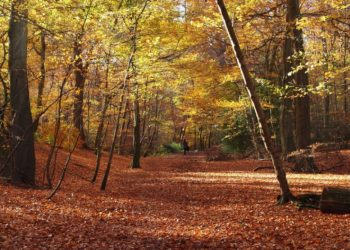 Autumn Walk in Burnham Beeches